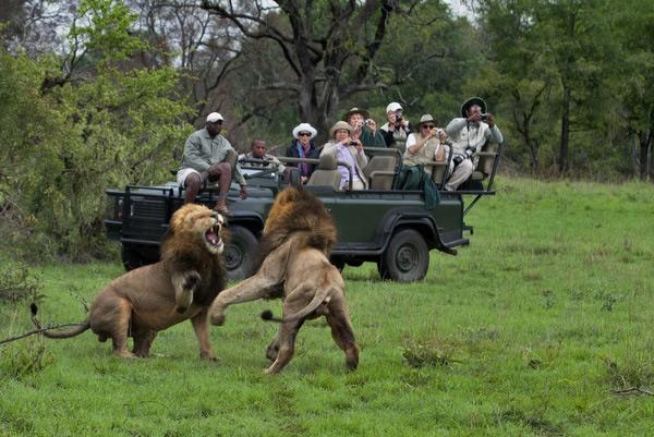 Africa_Safari