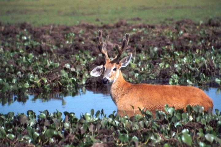pantanal-04-cia-ecoturismo