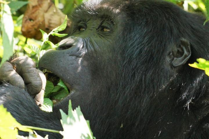 zanzibar-uganda10