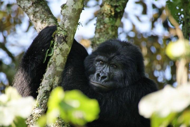 zanzibar-uganda13