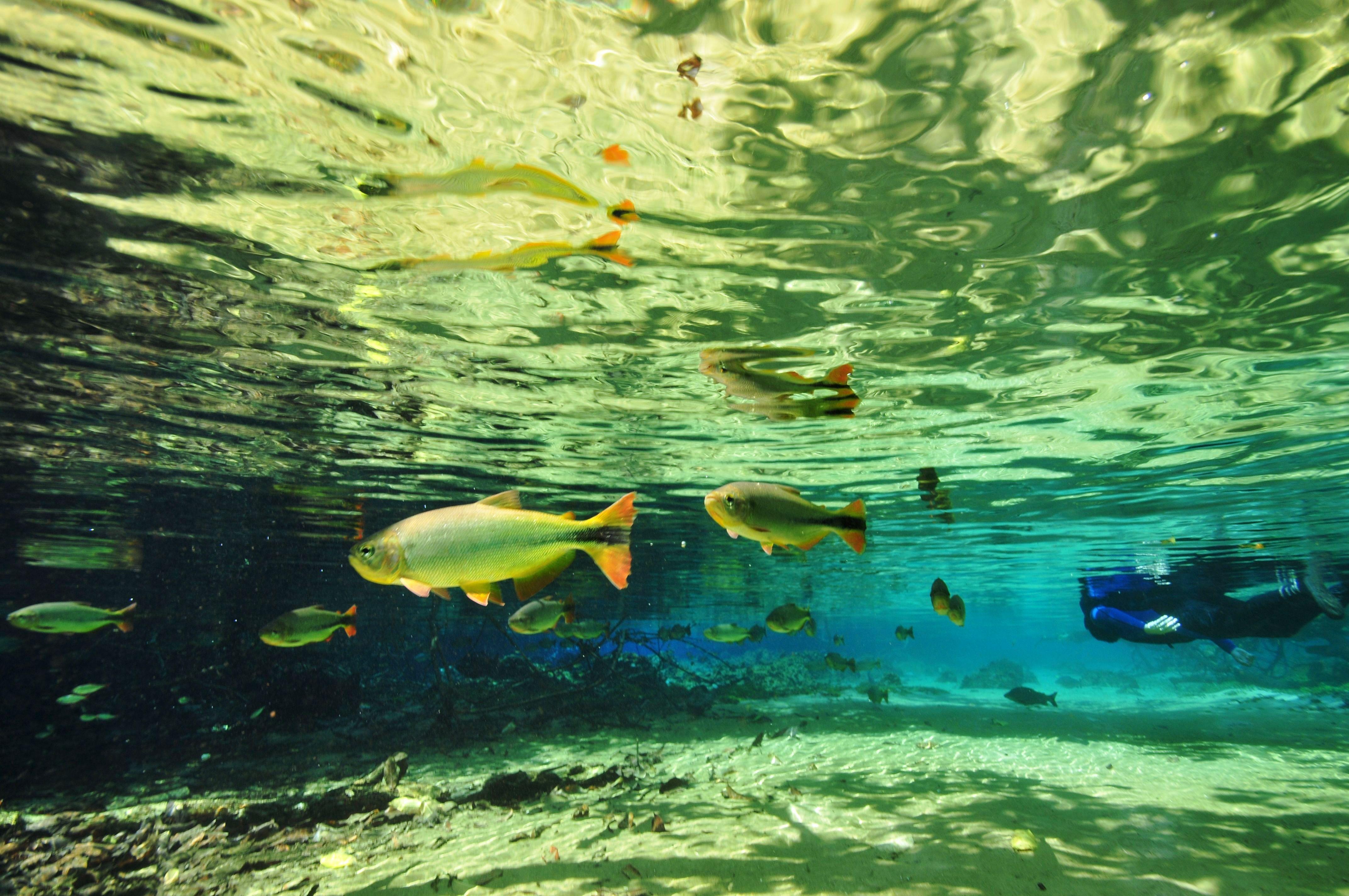 Bonito Flutuação_-_Snorkeling_at_Rio_da_Prata_-_André_Seale